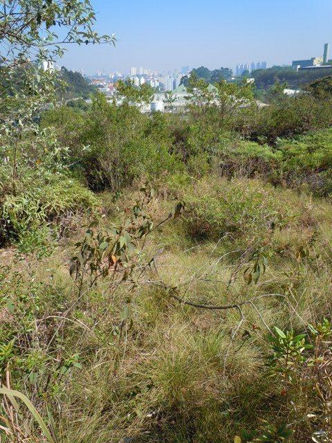 Reserva de Cerrado na USP (foto Ricardo Cardim)
